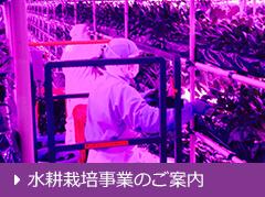 水耕栽培事業のご案内