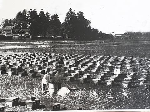 昭和創業のころの長嶺養蜂場さんの作業風景