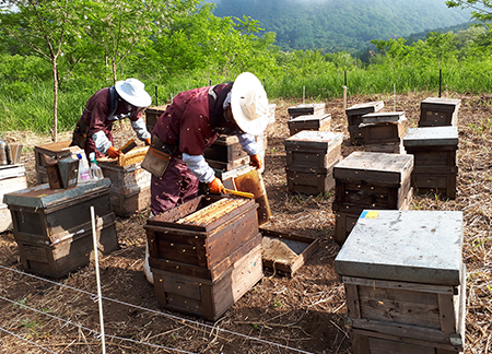 養蜂場の様子1