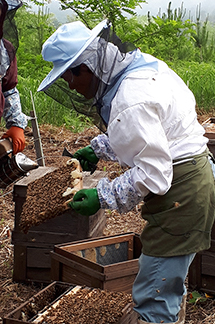 養蜂場の様子2