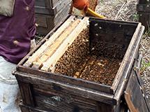 養蜂場の様子4