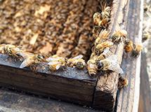 養蜂場の様子5