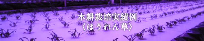 水耕栽培実績例〈ほんれん草〉