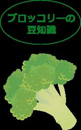 ブロッコリーの豆知識