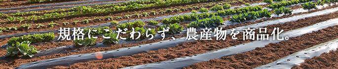規格にこだわらず、農産物を商品化。