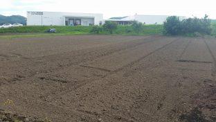 加工場前にひろがる農地に、大根、人参を栽培!
